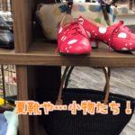 夏靴や…小物たち!